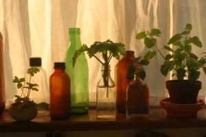 Assortment of plants on the Houseproud homestead's kitchen window