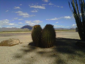 Barrel cactus at the Tucson Trap and Skeet Club.