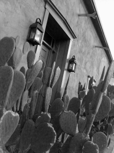 There are a number of lovely adobe homes in the El Presido district of  Tucson - look at this tiny treasure!