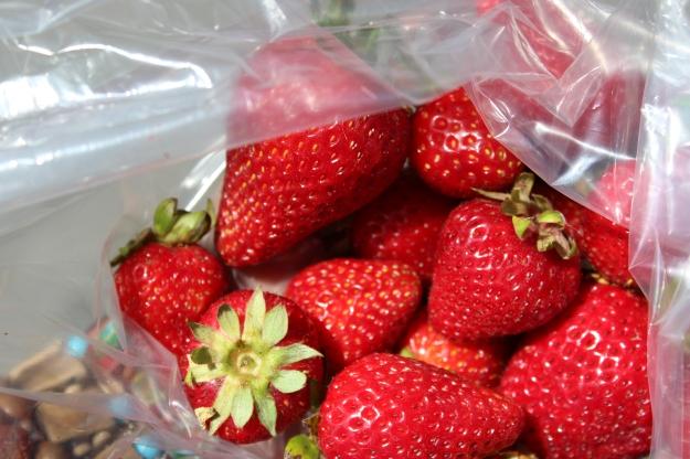 Houseproud fieldtrip farmers market strawberries IMG_1255