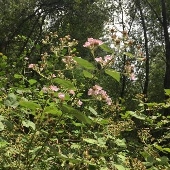 Redwood Regional Park EBRPD IMG_2406