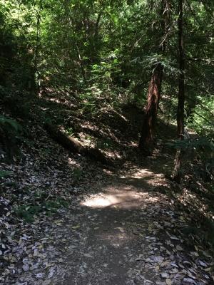 Redwood Regional Park EBRPD IMG_2409