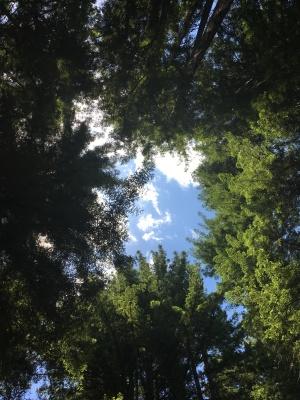 Redwood Regional Park EBRPD IMG_2414