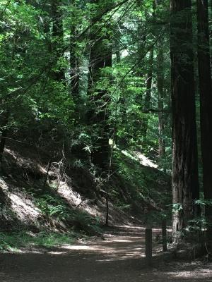 Redwood Regional Park EBRPD IMG_2416