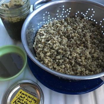 Houseproud lentils and bulgur recipe IMG_3961